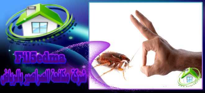 شركة مكافحة الصراصير بالرياض The company of cockroaches in Riyadh
