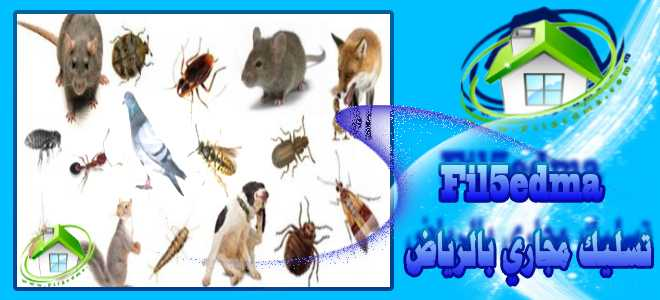 شركة مكافحة حشرات بالرياض An insect control company in Riyadh