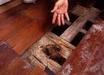 كيفية التخلص من النمل الأبيض
