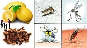 حل مشكلة الحشرات المنزلية